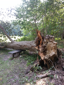 tree fall in park