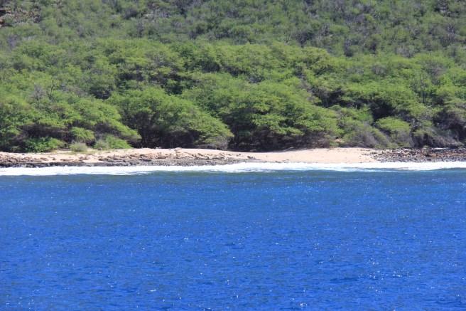 Lanai Snorkel Trip May 22 Hawaii 020