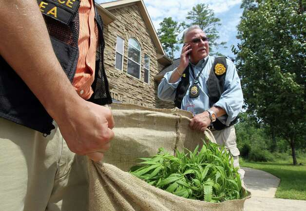 "DEA Special Agent in Charge Javier Peña helps carry pot seized from a ""grow house"" in Spring. Dozens of homes, rented by Vietnamese traffickers, were raided. Twenty-two people reportedly were detained. Photo: James Nielsen / © Houston Chronicle 2012"