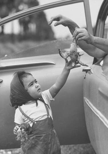Child petting dead bird at dove hunt, 1961.