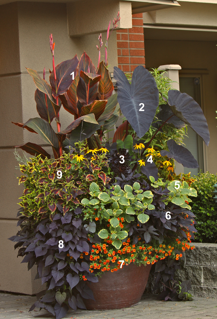 Overwhelmed by Mixed Containers? Try These 10 Tips from ... on Tree Planting Ideas For Backyard id=51362