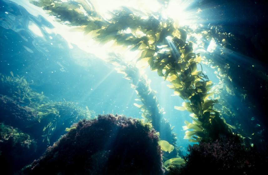 Powerful Anti Aging Ingredients Under The Sea Seaweed