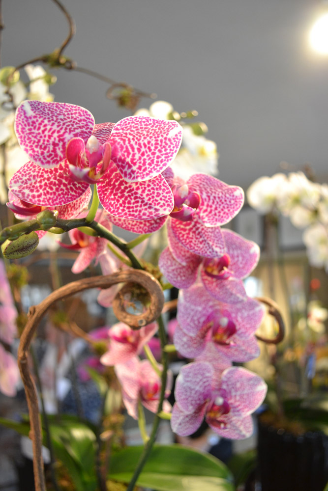 Dr Delphinium Hosts Ribbon Cutting At New Flower Amp Orchid