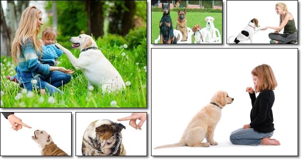 Daniel Stevens – Author of Secrets to Dog Training – Review