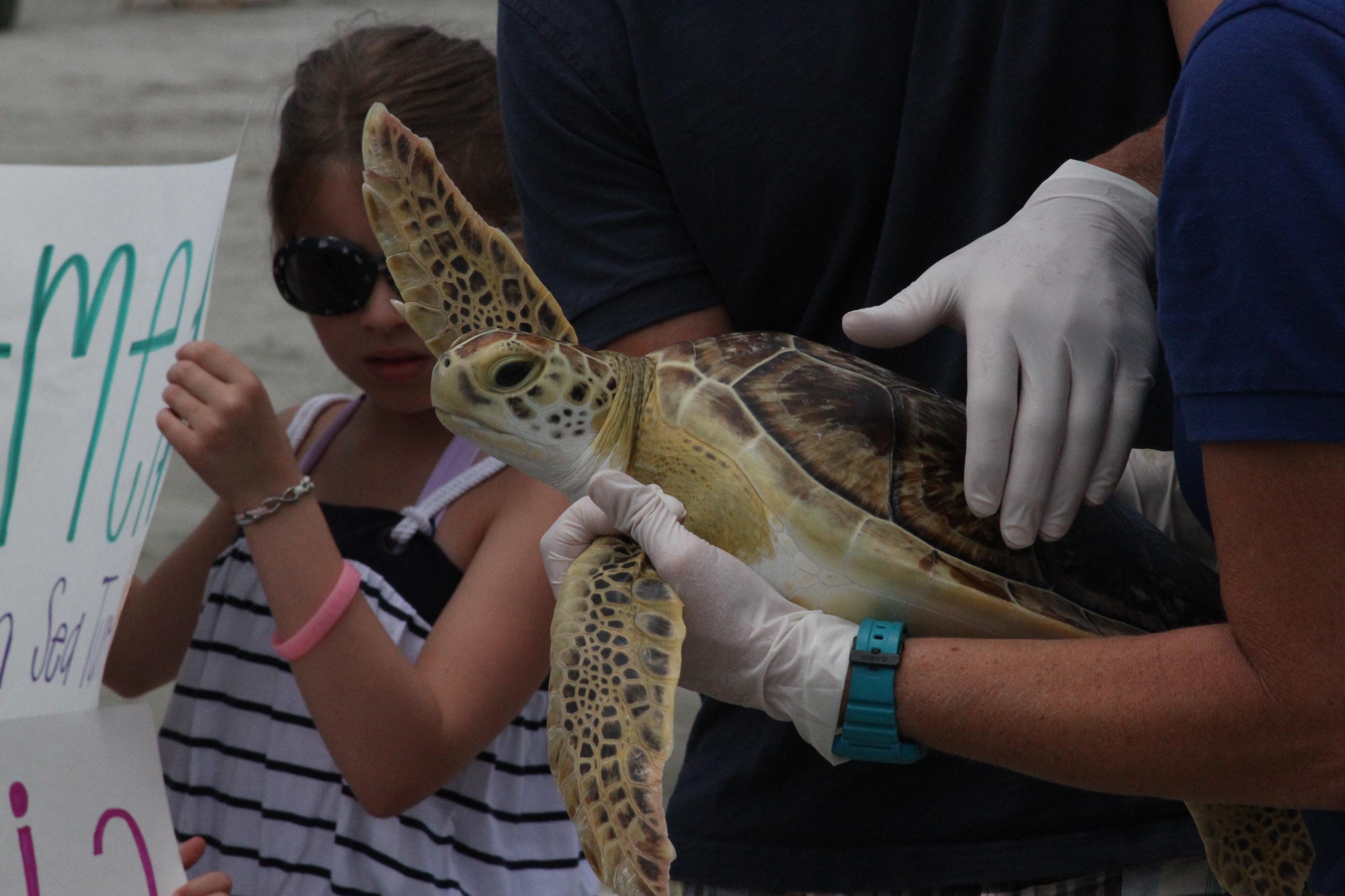 Cold Stunned Sea Turtle Treated At The South Carolina