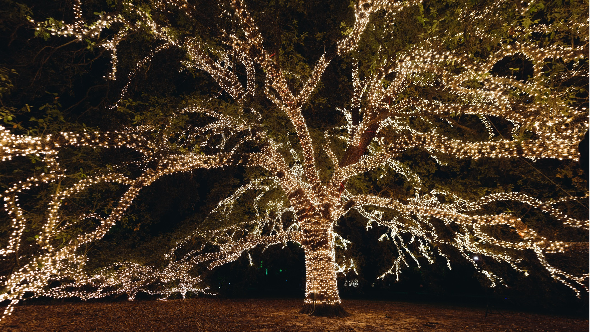 Celebrate The Holidays In Grand Style At The Houstonian