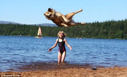 真的猛狗,能跳1米83