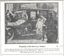 1915 WW1 week 31 French Life-saving dogs