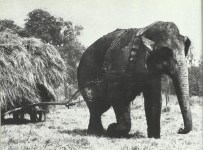 instead of a tractor, a circus elephant.