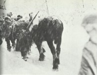 US troops in Winter War