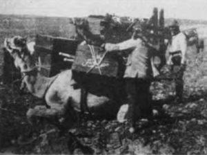 Turkish Army camel transport