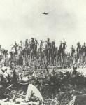 Dauntless dive-bomber of the 'Cactus Air Force'