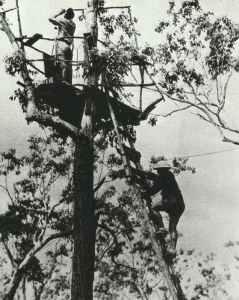 Air raid observers Australia