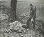 The fallen comrade