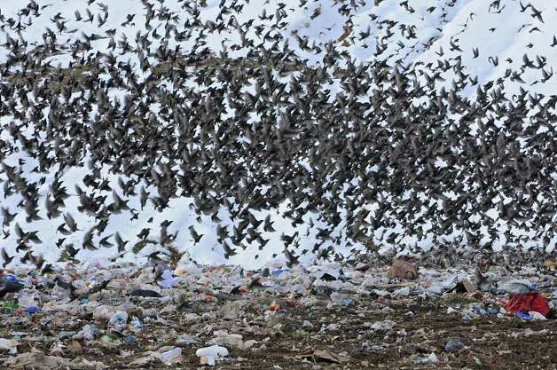 Landfill in Albany