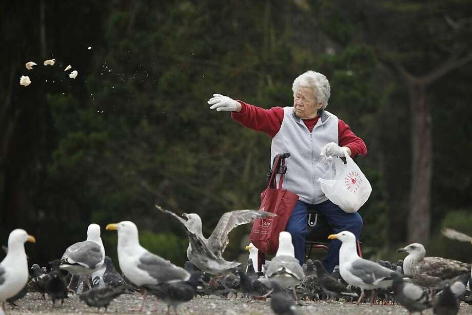 Resultado de imagen de feeding birds