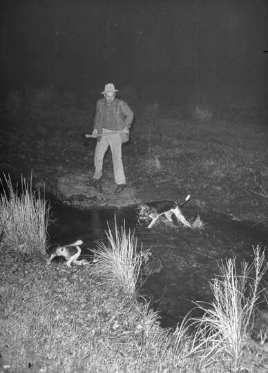 Fred Gipson with dogs during coon hunt, 1949.