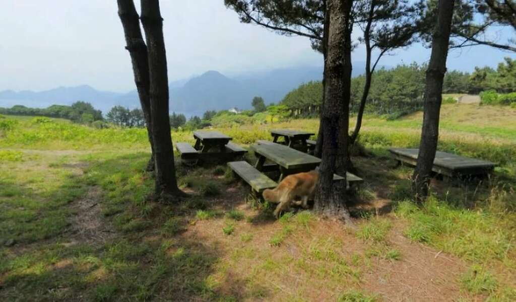 We really don't have that may picnics despite all these tables. Photo: Google Street View