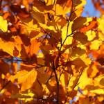Fall Foliage: Where to See Seasonal Shades in the Bay Area