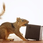 Watch These Frustrated Squirrels Go Nuts