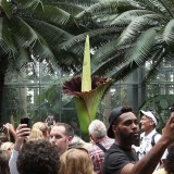What's In It for the Corpse Flower to Smell Like Death?