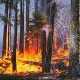 Study Finds Surprising Culprit Drives Forest Fire Behavior