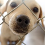 California Just Became First State to Ban 'Puppy Mill' Sales