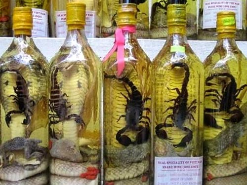 Cobra Infusion Funny Bizarre Amazing Pictures Amp Videos