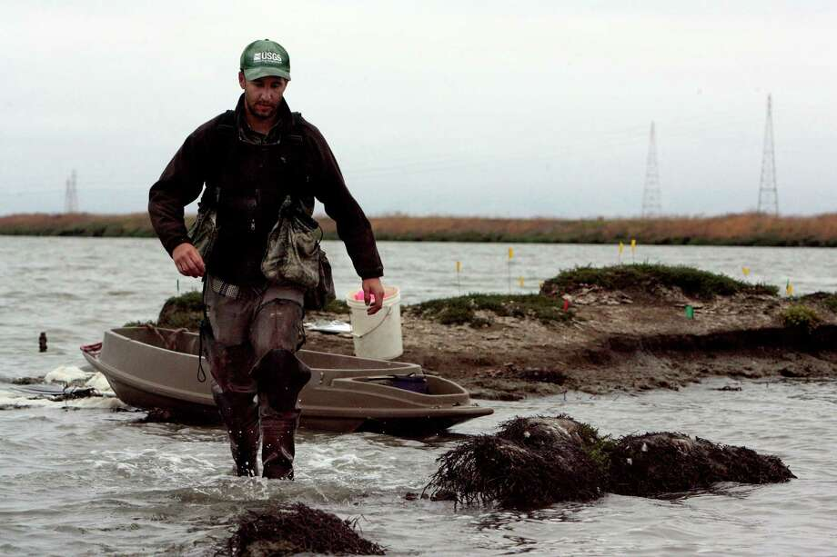 USGS biologist Jarred Barr comes ashore to the island where the birds nest to inspect tern and American avocet nests and eggs. Photo: Katy Raddatz / Special To The Chronicle / ONLINE_YES