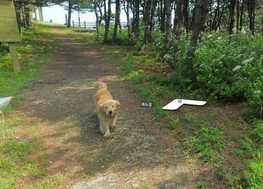 Hi, I'll be your canine guide today: A friendly dog tailed a Daum street view photographer during his shoot of the tiny South Korean island of Jukdo and managed to get in every image. Photo: Google Street View
