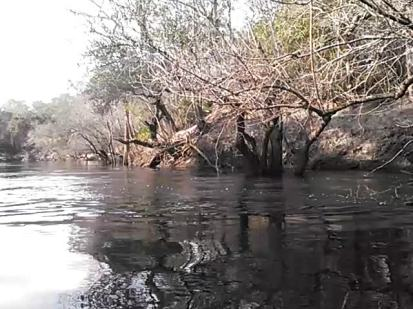 640x480 Movie: Paddling (2.3M), in Statenville to Sasser Landing on the Alapaha River, by John S. Quarterman, for WWALS.net, 15 February 2015