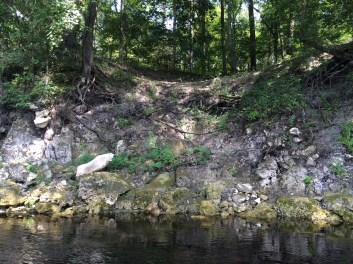 Karst limestone crossing proposed by Sabal Trail for Suwannee River here onto Tom Edwards' land in Suwannee County, Florida.