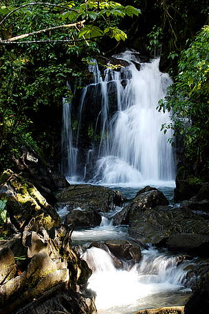 Located just across the river from deland, the site is popular for groups, family reunions and weddings and can accommodate up to 125 guests. The Atlantic Forest Day Stresses The Challenge To Protect What Is Left From This Forest Wwf Brasil