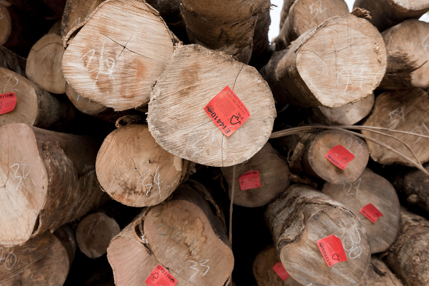 Simply put, certified wood originates from forest concessions where. Fsc Certification Yields Financial Benefits For Tropical Forest Businesses Shows New Wwf Report Wwf