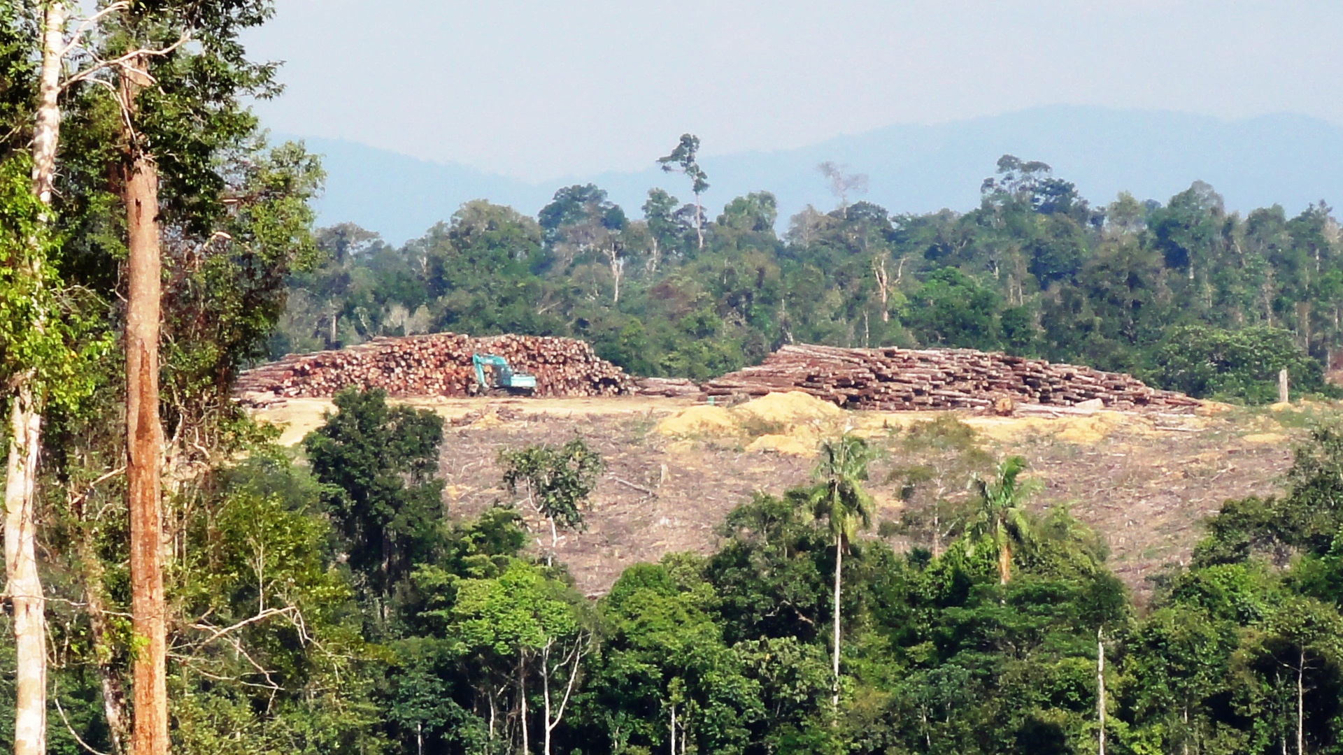 We monitored a decade of deforestation within 708 pas and their unprotected buffer areas, analyzed deforestation by pa management regimes. App S Latest Promise No More Than Protecting Already Protected Forest Wwf