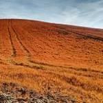 Cambiamo Agricoltura: l'esito finale del negoziato PAC eviti il male peggiore