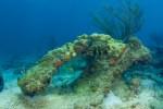 environment_marine_ocean