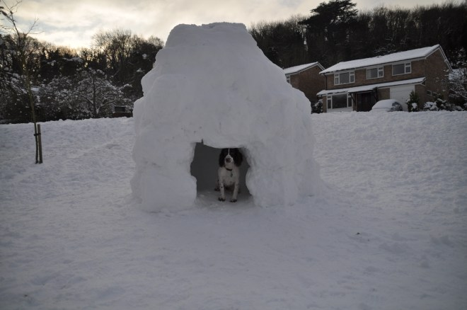 Rosie in Igloo
