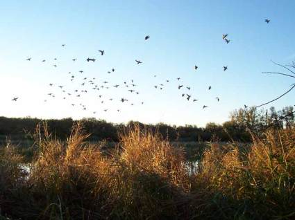 Duck-Hunting-Sept24-028