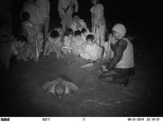 ウミガメ観察会