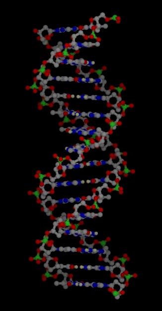 https://i1.wp.com/www-jmg.ch.cam.ac.uk/tools/magnus/molecules/nucleic/dna1.jpg