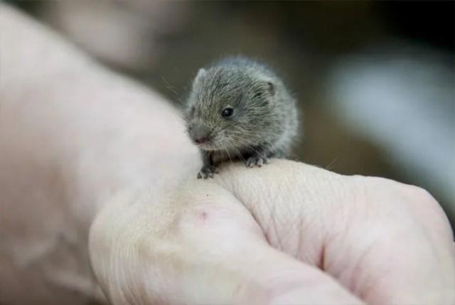 filhote de hamster na mão do tutor