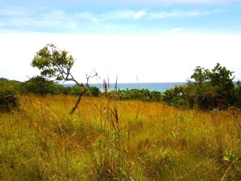 land-sumba-real-estate-beach