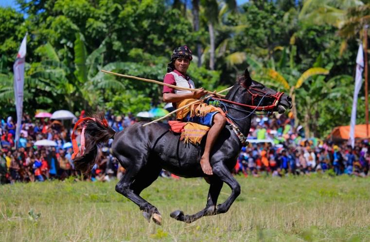 Pasola fesitval sumba horse