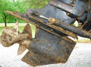 zebra_mussels_hitching_a_ride--edited.jpg.728x520_q85