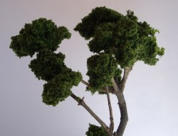 Done tree with natural branches
