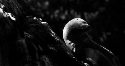 © Facundo Geli