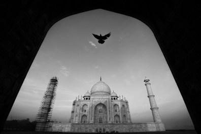 © Ravikanth Kurma - India