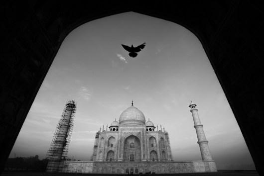 © Ravikanth Kurma - India