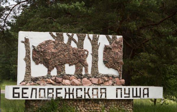 Беловежская пуща, Беларусь: описание, фото, где находится ...